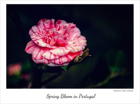 Spring Bloom in Portugal