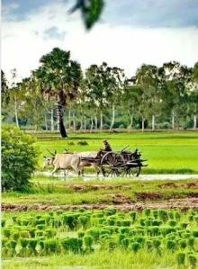 Thailand's rural life!