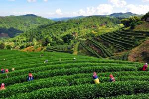 Chiangrai Thailand