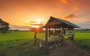 Sunset over rice fields Thailand