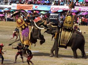Surin-Elephant-Round-up-and-Elephant-Show