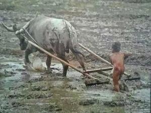Thailand farmers
