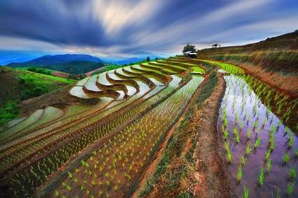 Rice terrace in Chaing Mai Thailand