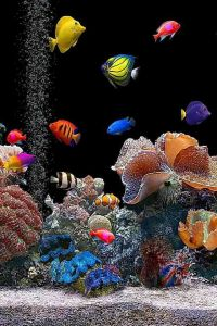 Colorful Tropical Fish at Koh Tan in Koh samui,Thailand