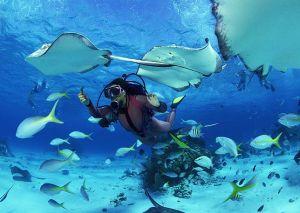 Amazing Under Water in Koh samui - Thailand,welcome!