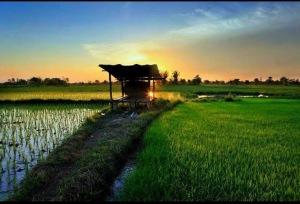 Stunning sunset over rice fields in Maung surin - Thailand.