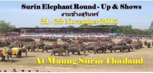 Elephant round - up & show - Surin - Thailand