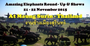 Mang Surin Thailand,welcome!