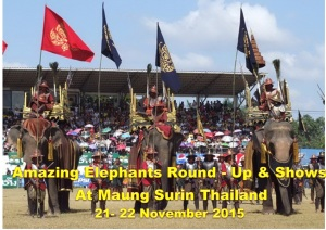 Surin Elephants round - up & shows
