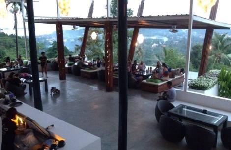 Gecko samui - Bohput hill - Thailand.