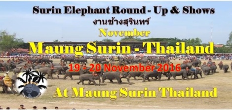 maung-surin-in-thailand-elephants-round-up-shows