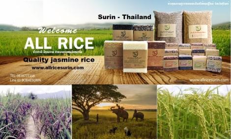 Surin - Thailand.